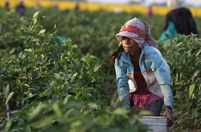 mexico-field-labor