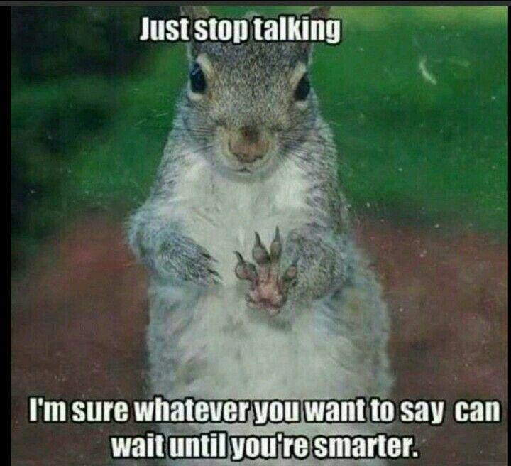 shut-up-squirrel