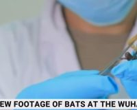 WATCH: Newly Unearthed Video Shows Wuhan Lab Kept Live Bats Contradicting WHO Investigation