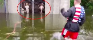 WATCH: Heroic Bro Rescues Dogs From LOCKED Cage In Flo's Rising Flood Waters