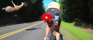 Watch: Flying Deer Nearly Takes Out Cyclist - Yes, We Said Flying Deer
