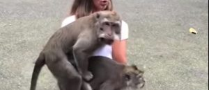 WATCH: Monkeys Have SEX On Tourist's Lap - What Would You Do?