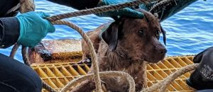 CLASH QUIZ: Was This Dog RESCUED 13mi., 47mi. or 135mi. Out To SEA?!