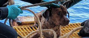 CLASH QUIZ: Was This Dog RESCUED 13mi., 47mi. or 135mi. Out To SEA?!